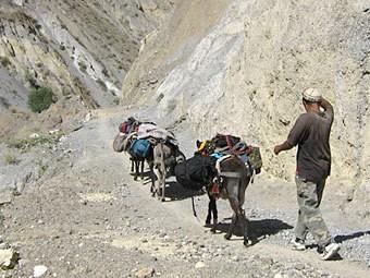 Президента Таджикистана решили оградить от ишаков